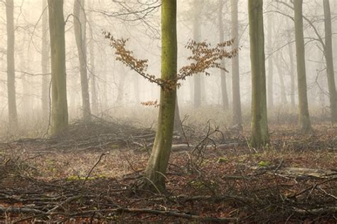 essential guide  woodland photography