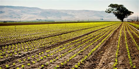 agriculture yields jobs     farm wisconsin