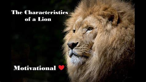 characteristics   lion motivational lion