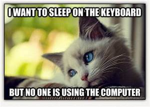 Cute And Funny Cat Memes