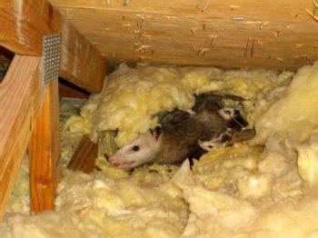 bird bat wildlife abatement services hunters services