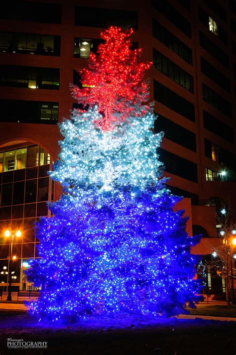 1000 images about blue tree s on