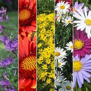 Plantes Vivaces Pour Massif : kit de vivaces massif fleuri plantes et jardins ~ Premium-room.com Idées de Décoration