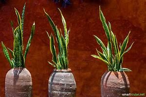 Pflegeleichte Zimmerpflanzen Mit Blüten : pflegeleichte zimmerpflanzen f r menschen ohne gr nen daumen ~ Eleganceandgraceweddings.com Haus und Dekorationen
