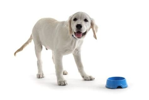 top   large breed puppy foods