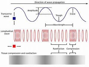 1  Longitudinal And Transverse Waves
