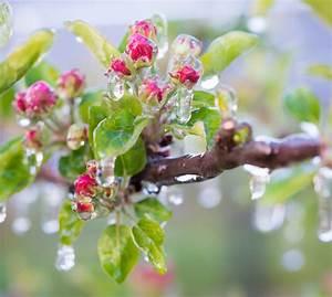 Stickstoffmangel Bei Pflanzen : molekularer winterspeck bei pflanzen helmholtz zentrum ~ Lizthompson.info Haus und Dekorationen