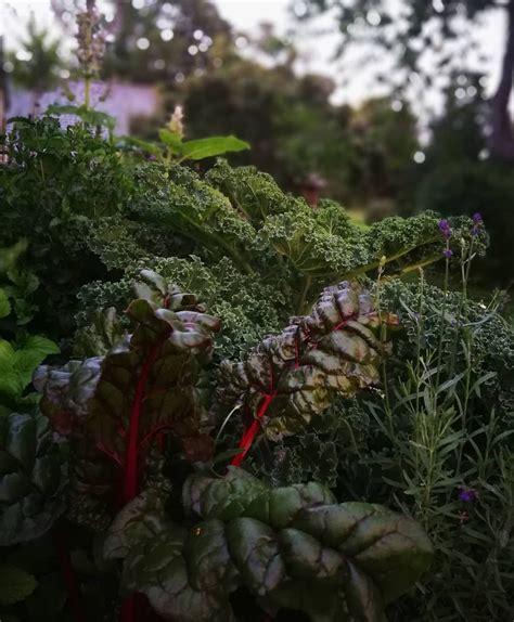 Vakara gaisma. Garšaugu dārzā. Vakars ir mierīgs. Vakars ...