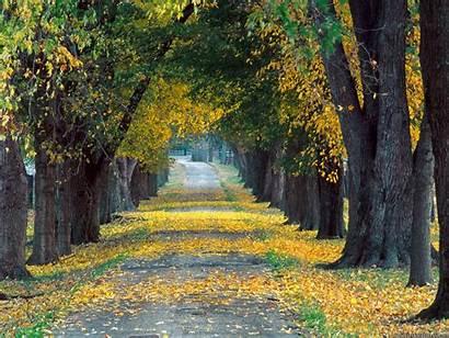 Kentucky Tree Lined Natural Roadway Louisville Desktop