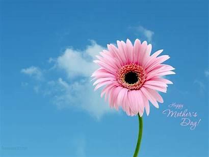 Mother Mothers Wallpapers Backgrounds Fanpop Pink Desktop