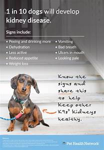 Facebook Graphics  Chronic Kidney Disease In Dogs Graphics