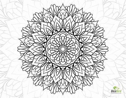 Coloring Adults Printable Flower Crazy Adult Books