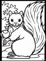 Acorn Squirrel Coloring Fall Squirrels sketch template