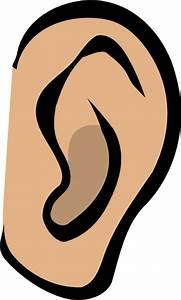 Ear - Body Part Clip Art At Clker Com