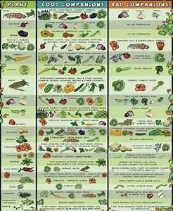 vegetable garden plant pairings chart companion planting by cornelia planten eetbare tuin en