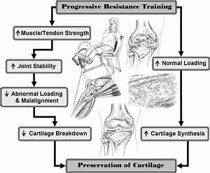 Resistive Exercise For Arthritic Cartilage Health  Reach