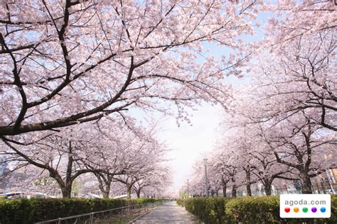agodacom readies accommodation specials  japans