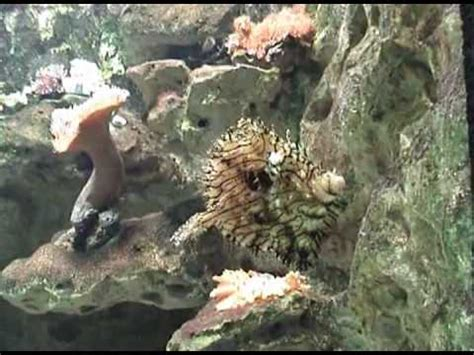 poissons tropicaux d eau de mer