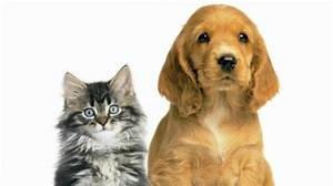 You Will Melt After Looking At This Dog And Cat Moment