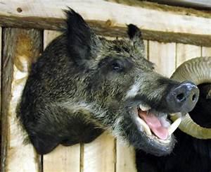 boar head - Google Search | Cymbeline | Pinterest | Gray ...