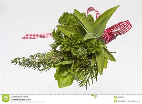 herbe de cuisine herbes de cuisine photo stock image du sain aromatique