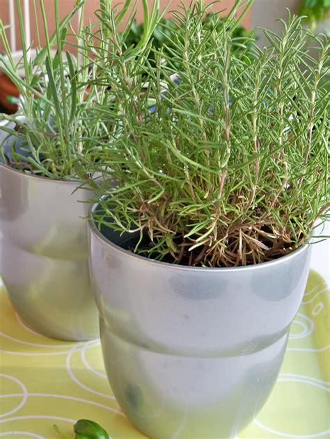 come fare l orto sul terrazzo orto sul balcone erbaviola grazia cacciola