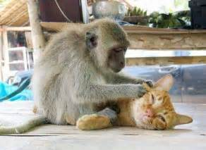 monkey cat monkeys and cats