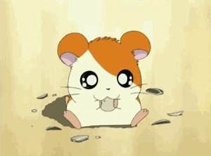 Hamster What GIF - Find & Share on GIPHY