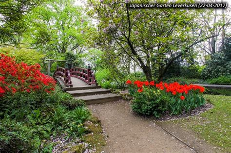 Japanischer Garten Leverkusen Kirschblüte by Japanischer Garten Leverkusen Picture Of Japanischer