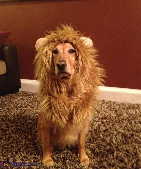 tessa  lion costume  dogs
