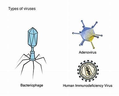 Virus Genome Illustration Tg Genetics