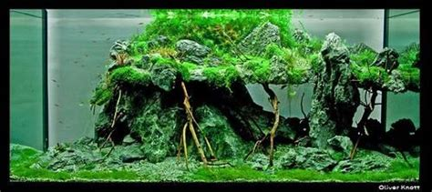 Oliver Knott Aquascaping by Aquascape By Oliver Knott Aquascaping
