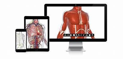 Biodigital Human 3d Science Visualization Platform Anatomy