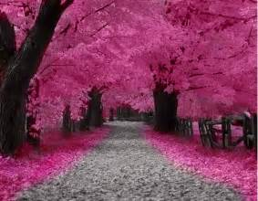 Pumpkin Patch Dayton Ohio by Cherry Trees Pink Blossom Flowers Pinterest Cherry