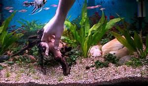 Aquarium Einrichten Beispiele : ver nderungen im aquarium wie richte ich mein aquarium ein ~ Frokenaadalensverden.com Haus und Dekorationen