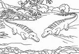 Alligator Coloring Pages Animals Zoo Printable Alligators Animal Crocodile Cool2bkids Swamp Bestcoloringpagesforkids Printables Getcolorings Getdrawings sketch template