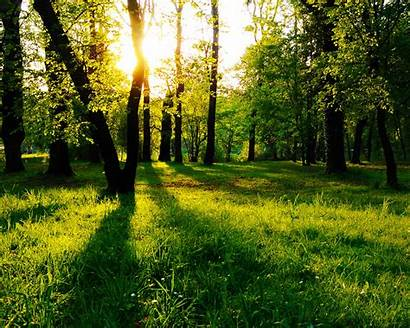 Sun Trees Mindful Encircling Nature Between Landscape