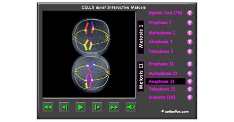 meiosis interactive