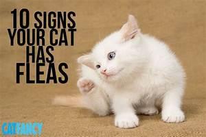 10 Telltale Signs Your Cat Has Fleas | Cats | Pinterest ...