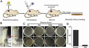 In Vivo Antibacterial Performance Of Cds   A  Protocol For