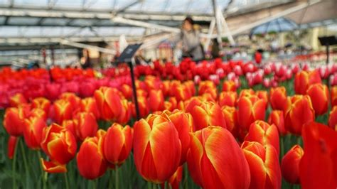 Keukenhof 2019 Is Open Now