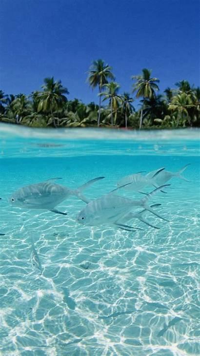 Iphone Tropical Fish Sea Scenery Wallpapers Caribbean