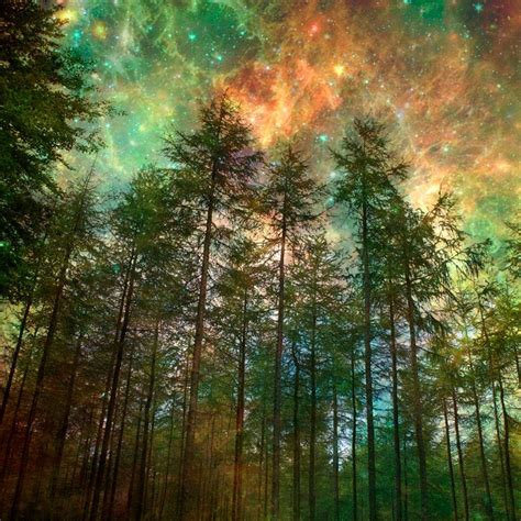 nature photographytrees forest woodland starry night sky