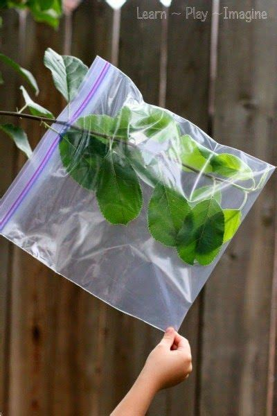 How Does a Leaf Get Water (Learn Play Imagine) | Science ...