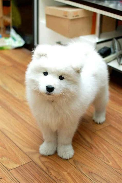 The 15 Most Fluffy And Cute Animals In The World The O