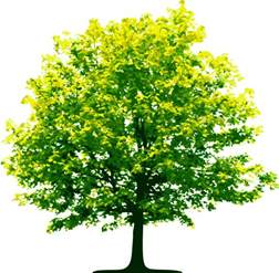 tree png images pictures free