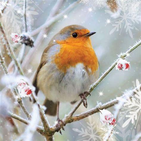 Find over 100+ of the best free bird images. European robin (avec images) | Photo oiseau, Oiseaux des jardins, Oiseau en aquarelle