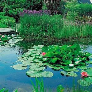Wasserpflanzen Teich Kaufen : wasser pflanzen quotes by alexander ii like success ~ Michelbontemps.com Haus und Dekorationen