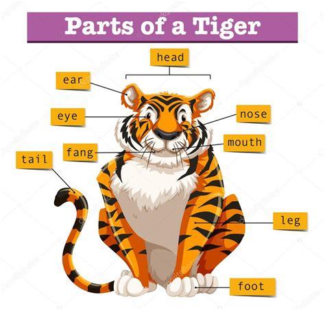 diagram zobrazuj 237 c 237 č 225 sti tygr stock vektor 169 blueringmedia 118401858