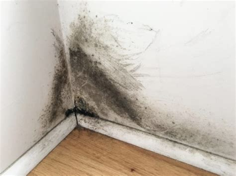 Black Mold On Drywall? Get Rid Of It Right Away Clean